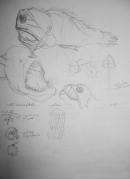 creatures_sketches_refs_s